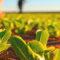 Painelistas apresentam agenda para o agronegócio pós-pandemia